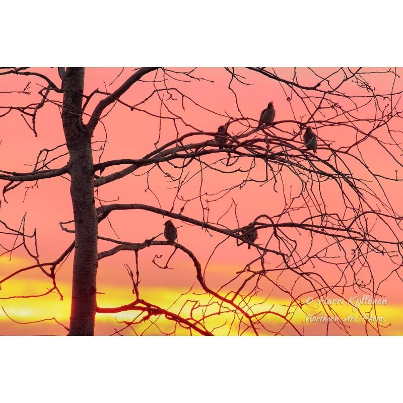 Nauttien auringonlaskusta - Canvas-taulu