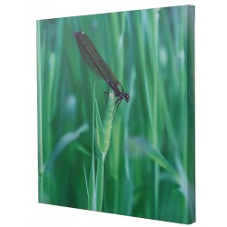 Customized Photo Square Canvas Print