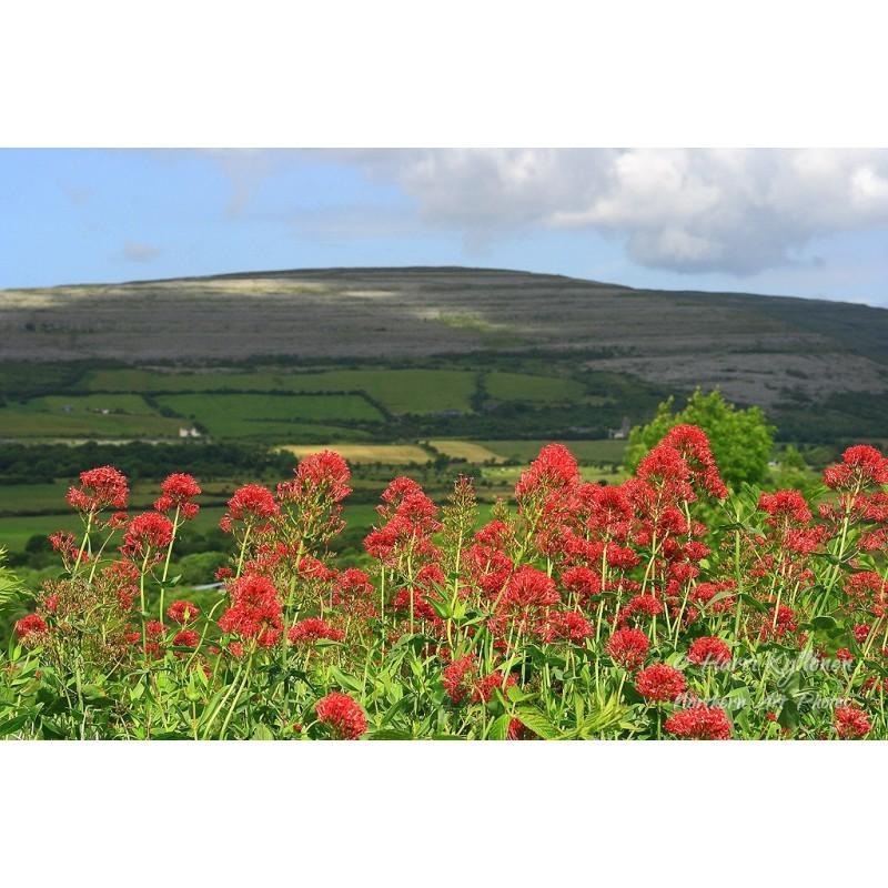 Punaiset kukat Irkkutien varrella - Canvas-taulu
