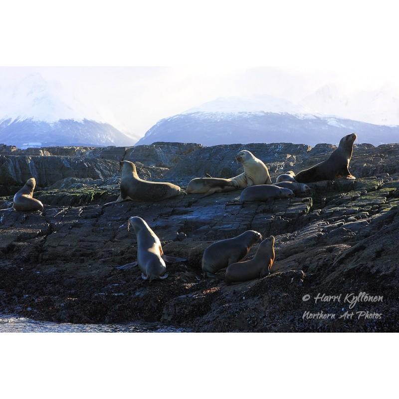 Merileijonat ja Martial Mountains II - Canvas-taulu