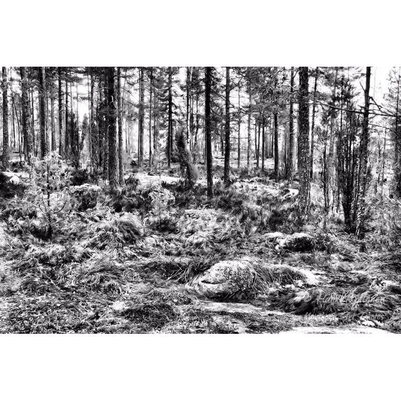 Kaoottinen metsä - Canvas-taulu