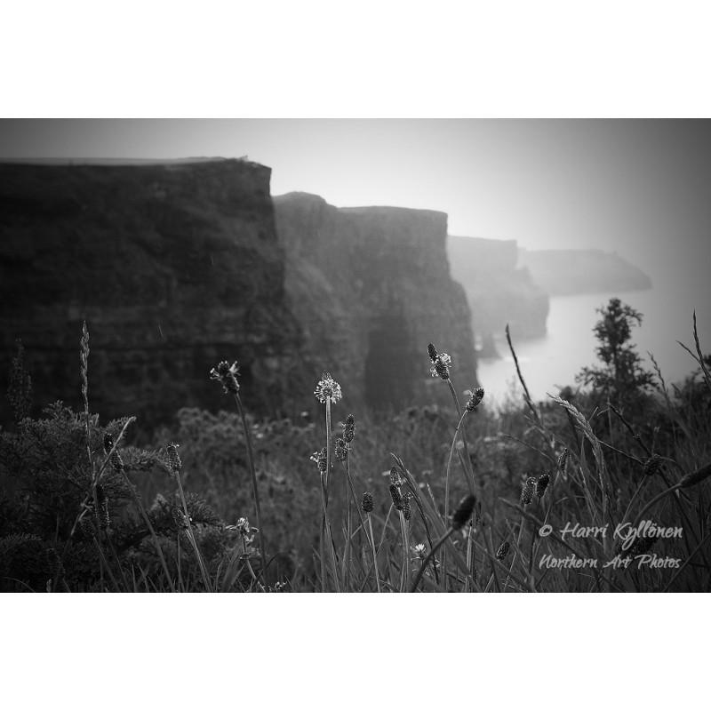 Cliffs of Moherin kukat - Canvas-taulu
