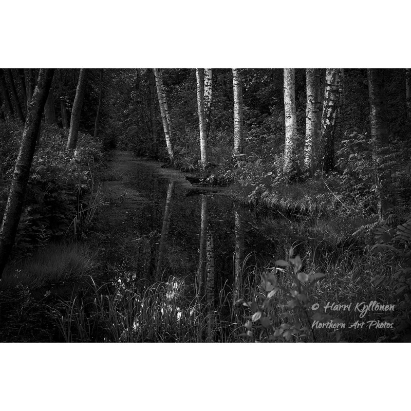 Hiljainen puro - Canvas-taulu