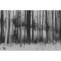 Erilainen metsä - Canvas-taulu