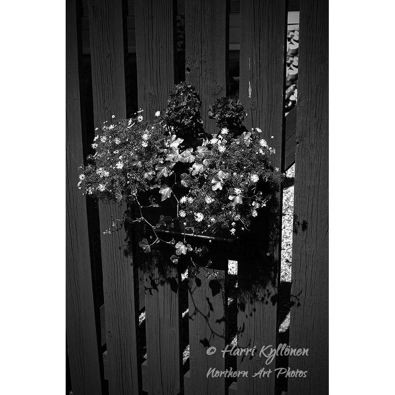 Puuaidan kukat - Canvas-taulu