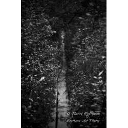 Hidden path - Canvas print