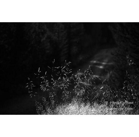 Salainen metsätie mv - Canvas-taulu