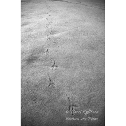 Bird tracks - Canvas print