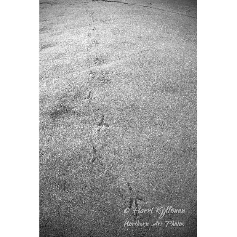 Linnun jalanjäljet - Canvas-taulu