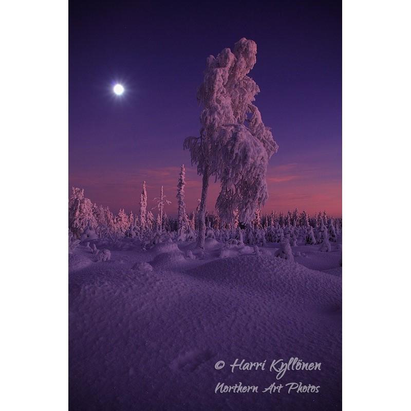 Kaamosvalo ja kuu II - Canvas-taulu