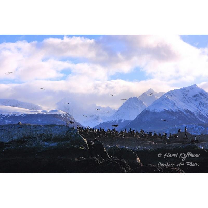 Ushuaian asukkaat - Canvas-taulu