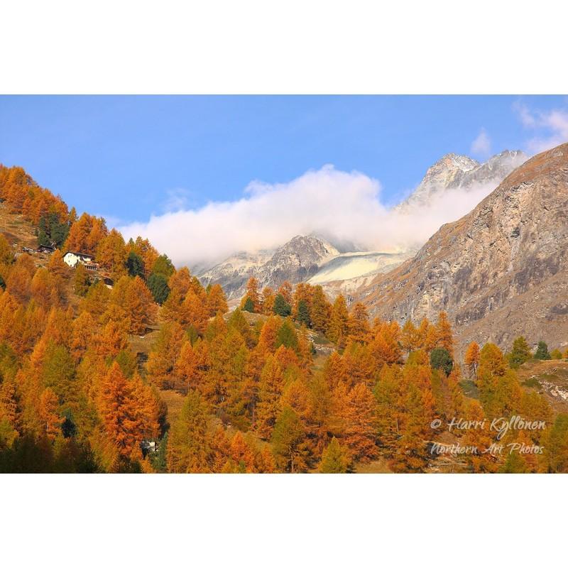 Vuoriston ruskaa II - Canvas-taulu