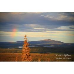 Spruce, rainbow and...