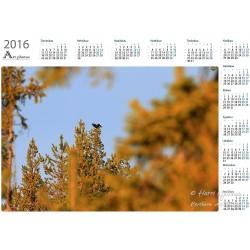 Wood Grouse IV - Year Calendar