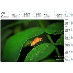Yellow fly on a leaf - Year...