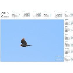 Hiiripöllön lento -...