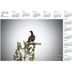 Teeri V - Vuosikalenteri