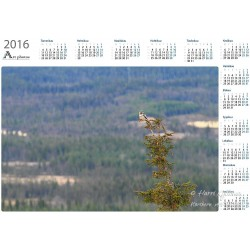 On a vantage point III - Year Calendar