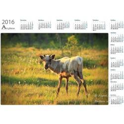 Reindeer fawn - Year Calendar