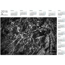 Treemoss II - Year Calendar
