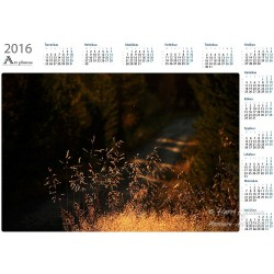Hidden forest road - Year Calendar
