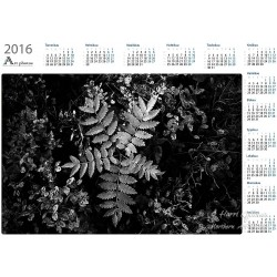 Rowan and blue berries - Year Calendar