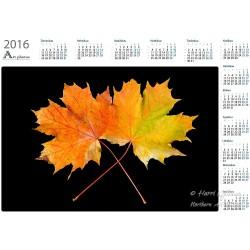 Maple leaves - Year Calendar