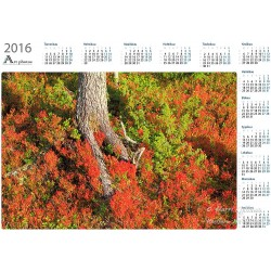 Root colors - Year Calendar