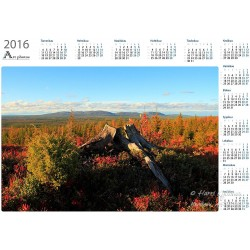 Stump - Year Calendar