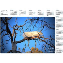 Snow nest - Year Calendar