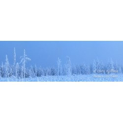 Arctic forest - Canvas print