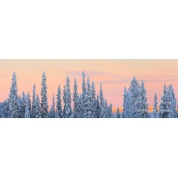 Light behind spruces - HD -...