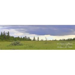 Paljasselkä meadow - HD -...