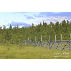 Old Snow Fence - Canvas print