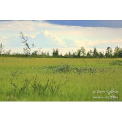 Small things on meadow - Canvas print