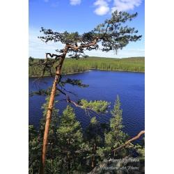 Tervajärven kesävärit - Canvas-taulu
