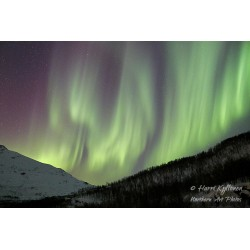 Aurora curtain at Gratangen - Canvas print