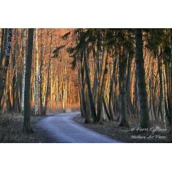 Evening path - Canvas print