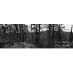 Metsä ja joki - HD -...