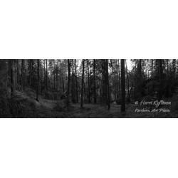 Metsä - HD - Canvas-taulu