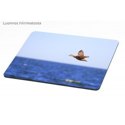 Eider fly-by - Mousepad /...
