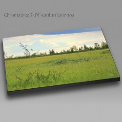Small things on meadow - Chromaluxe picture