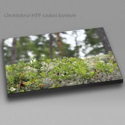 Metsän pienoismalli - Chromaluxe taulu