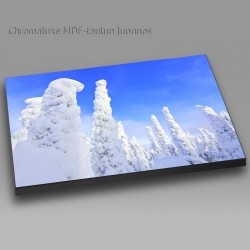 Crown snow forest -...