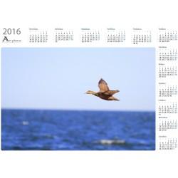 Eider fly-by - Year Calendar