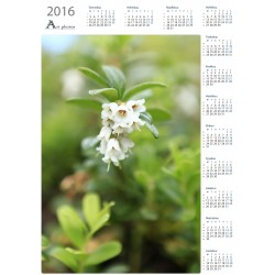Lingonberry flowers - Year Calendar