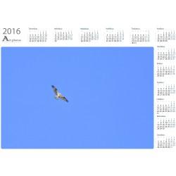 Kalasääski - Vuosikalenteri