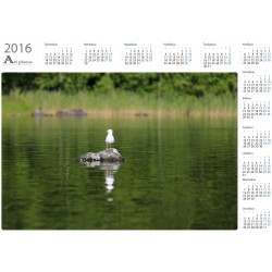 Seagull on the rock - Year Calendar