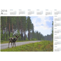 Standing reindeer in the rain - Year Calendar