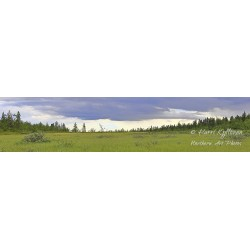 Paljasselkä meadow - Wallpaper